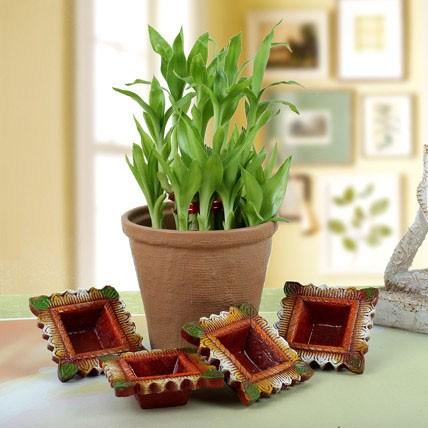 Diwali Plants