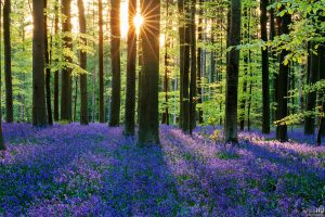 Top 8 Famous Spots to Experience the Real Beauty of Different Flowers