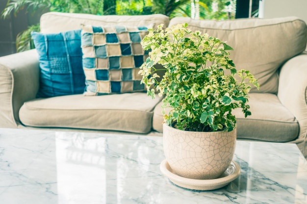 Top 7 Indoor Plants to Enhance the Stream of Positive Vitality in the House