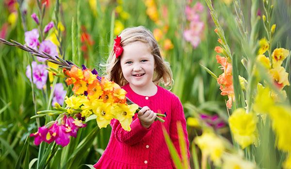 Gladiolus—the August birth flower