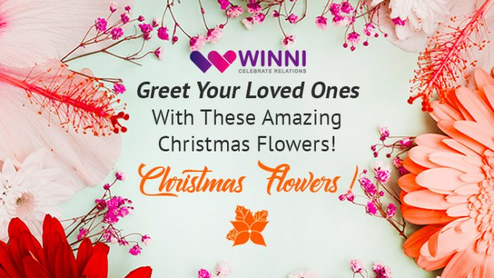 Greet Your Loved Ones With These Amazing Christmas Flowers!