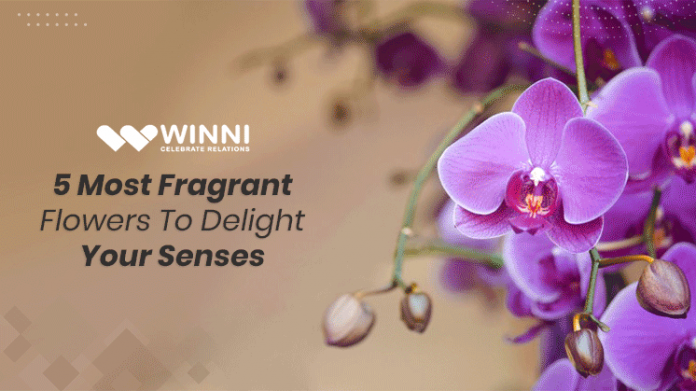 5 Most Fragrant Flowers to Delight Your Senses
