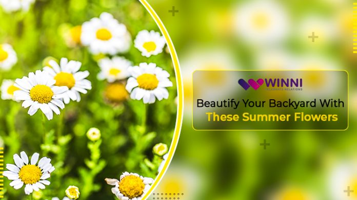 Beautify Your Backyard With These Summer Flowers!!!